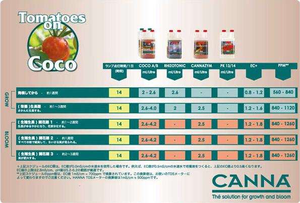 coco_tomatoe