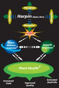 Harpin-diagram