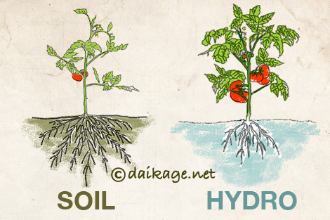 soil_hydro_root